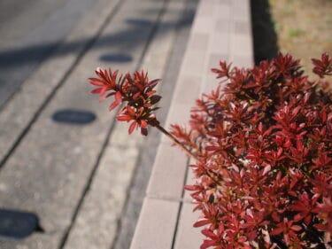 散歩途中、アパート前の生け垣がなんだか素敵な色だった(写真日和)